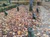 Кладбище «Vaiteņu», волость Вилцес, октябрь 2019 г. Остатки бывшего захоронения.